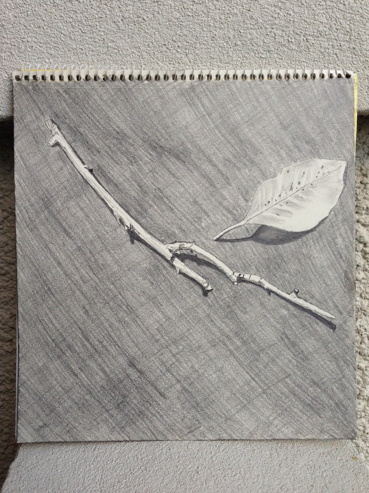 A leaf and a branch